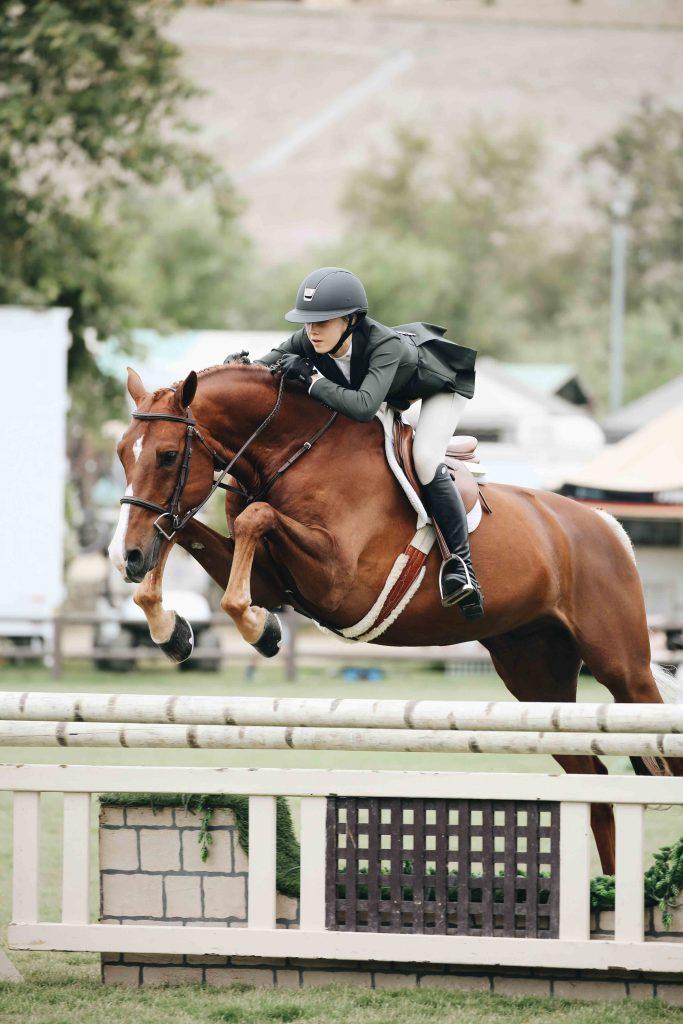 equestrian-horse-horse-rider-1546740